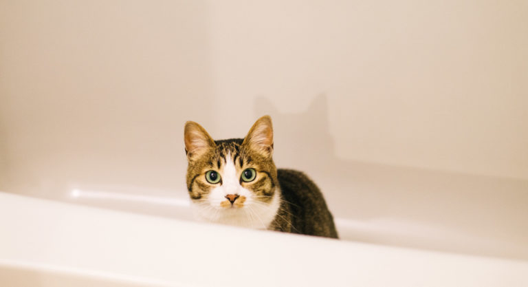 お風呂の収納はアイデア次第で劇的に変わる